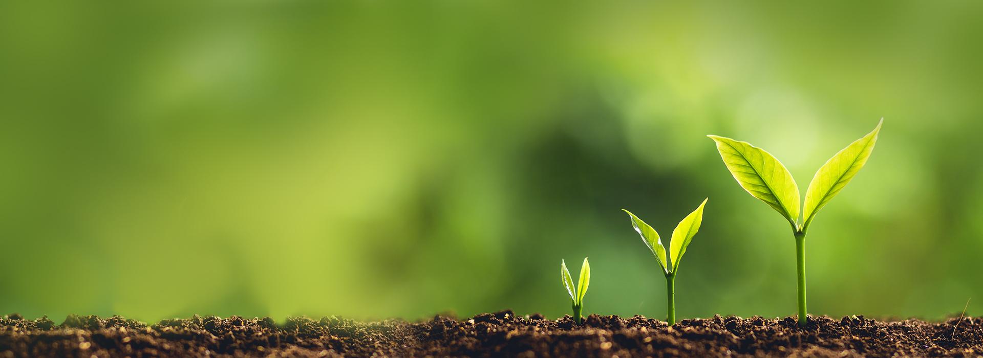 pflanzen sprießen aus der erde