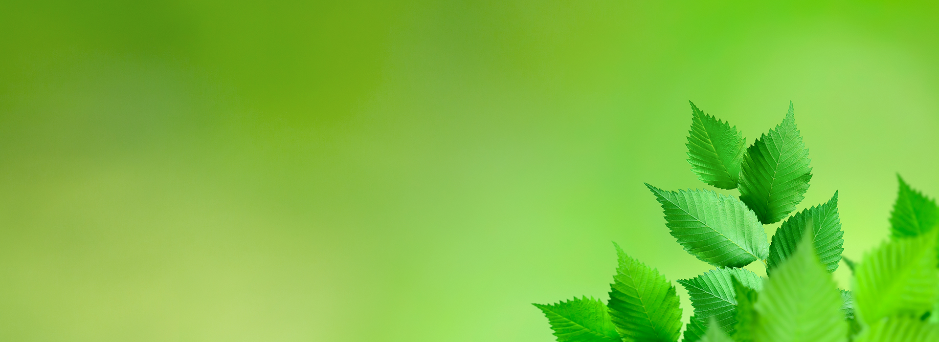 blätter vor grünem hintergrund